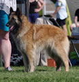 Cäsarborg's Foxy Lilac, exc open class females / AVO ERI